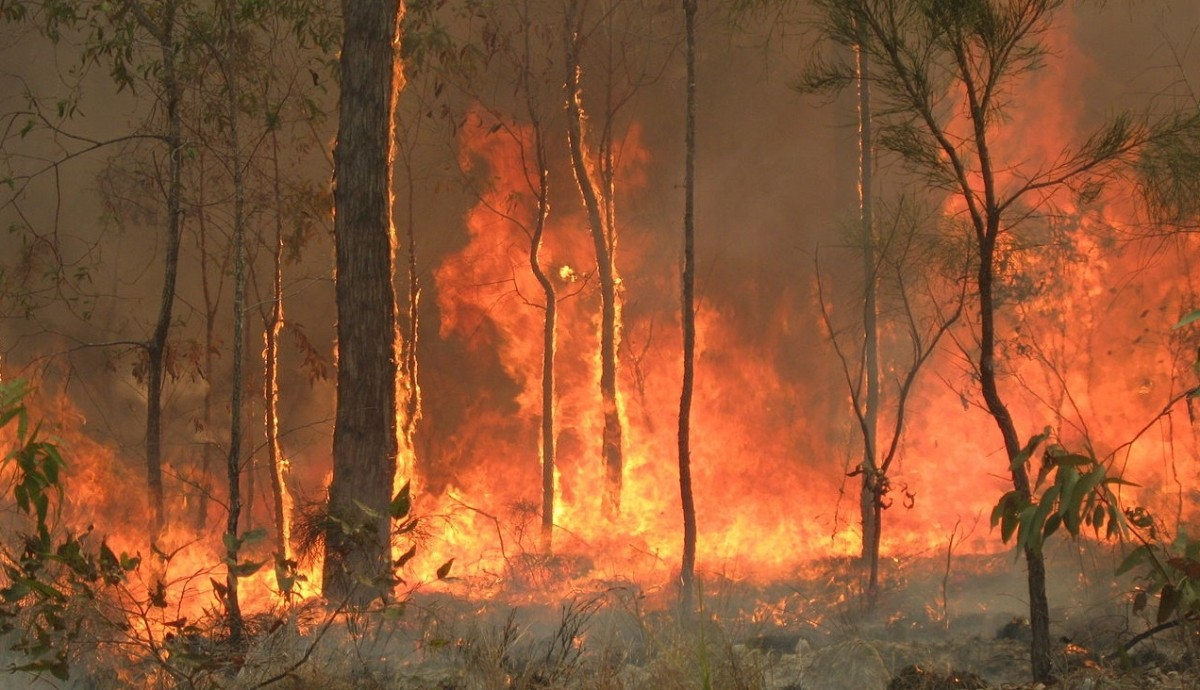 Bushfires in Queensland. Credits: 80 trading 24/Wikipedia